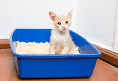 Young cat use the toilet Royalty Free Stock Photo