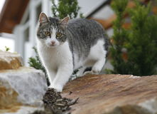 Young cat on wall Stock Images