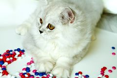 Young cat on a white background royalty free stock images