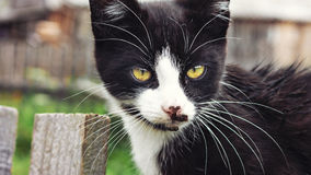 Young cat on a wooden fence Royalty Free Stock Images