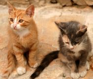 Young cats. Captured in Sibenic Croatia in August 2006 Royalty Free Stock Photos