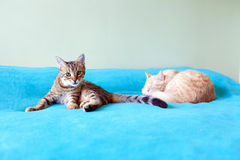 Young Cats Royalty Free Stock Photography