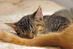 Young Cats Couple sleeps Stock Photo