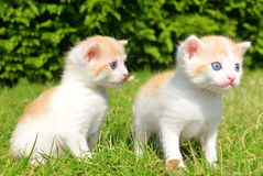Young cats Stock Images