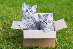 Young Cats In Cardboard Box On Grass Stock Image