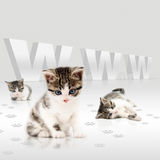 Young cats-internet concept Royalty Free Stock Images