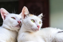 Young cats looking Stock Image