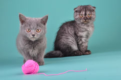 Young cats playing with a ball Stock Images