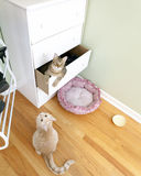 Young Cats. In the room royalty free stock photo