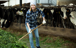 Young cattle-farm worker preparing grass Royalty Free Stock Photography