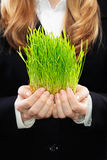 Young Caucasian business woman studio shot on green background. Holding fresh green grass. Stock Photo