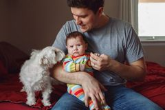 Young Caucasian father parent holding newborn baby and playing talking to small dogs pets in bedroom stock image