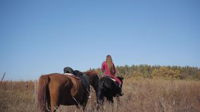 Young Caucasian female equestrian riding the black horse on the meadow and holding halter of the brown stallion