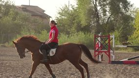 Young Caucasian girl riding on a brown horse. stock video footage
