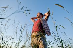 Young caucasian handsome man standing in a field at sunse. T. Concept of free lifestyle on rural place royalty free stock photography