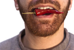 Man with a red hot chili pepper in his mouth Royalty Free Stock Images