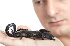 Young Caucasian man with scorpion Stock Images