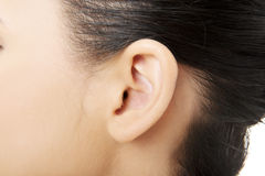 Ear Stock Photo