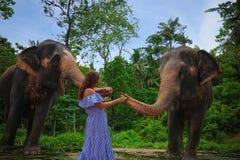 Young Caucasian Woman Feeding Elephants
