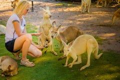 Kangaroo with joey Stock Photos