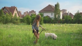 Young caucasian woman and her big white dog are walking on a field near small houses in summer day. Summer holidays in a countryside stock video