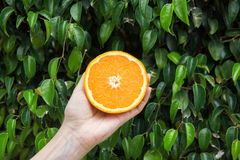Young Caucasian Woman Holding in Hand Halved Juicy Orange on Green Tree Foliage Nature Background. Vitamins Healthy Diet Summer Stock Photography