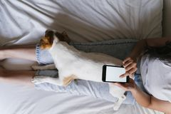 Free Young Caucasian Woman On Bed Using Mobile Phone. Cute Small Dog Lying Besides. Love For Animals And Technology Concept. Lifestyle Stock Image - 155162211