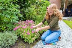 Young caucasian woman pruning sedum flowers Stock Image