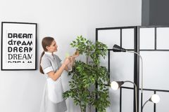 Young chambermaid spraying plant in room. Cleaning service royalty free stock photos