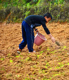 Young Chao Doi Agriculture. Stock Images