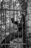 Young charming woman with long hair offender, sits behind bars in an ancient stone castle fortress prison prisoner and looks pityi Stock Photos