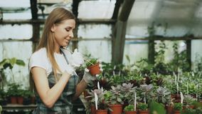 Young cheerful woman in apron and gloves gardening plants and loosen ground in flower in greenhouse. Young cheerful woman in apron and gloves gardening plants Royalty Free Stock Image