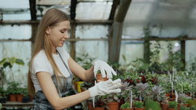 Young cheerful woman in apron and gloves gardening plants and loosen ground in flower in greenhouse stock footage