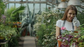 Young cheerful woman in apron and gloves talking phone while gardening plants and loosen ground in flower in greenhouse. Young cheerful woman in apron and gloves stock video