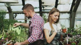 Young cheerful woman in apron and gloves loosen ground in flower and chatting his boyfriend in greenhouse. Young cheerful women in apron and gloves loosen ground Royalty Free Stock Images