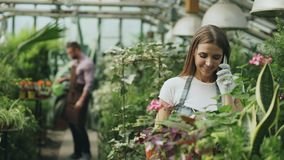 Young cheerful woman in apron and gloves talking phone while gardening plants and loosen ground in flower in greenhouse. Young cheerful women in apron and gloves Royalty Free Stock Images