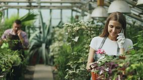 Young cheerful woman in apron and gloves talking phone while gardening plants and loosen ground in flower in greenhouse. Young cheerful women in apron and gloves Stock Photography