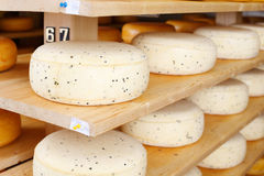 Young Cheese Ripening stock photos