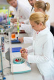 Young chemical technicians work with test tubes in lab Royalty Free Stock Photography