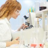 Young chemist in the laboratory. Royalty Free Stock Image