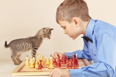Young chessplayer with kitten plays chess. Stock Photography