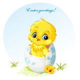 Young chick in egg. Festive easter postal with young chick in egg Stock Photo