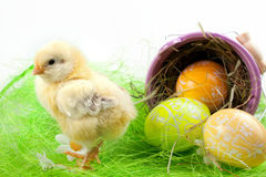 Young Chick and Painted Eggs Royalty Free Stock Photo