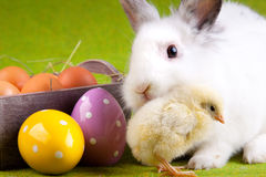Young Chick and Rabbit Stock Images