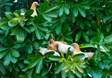 Young chicken will be sleep on tree Royalty Free Stock Photos