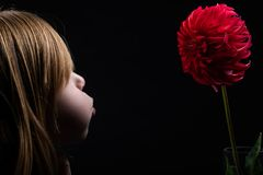 Young child blowing wind on a red rooster dahlia royalty free stock image