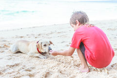 Young child boy having fun with white dog in the sea, summ Royalty Free Stock Photography