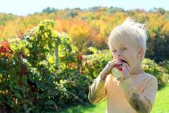 Young Child Eating Fruit at Apple Orchard Stock Photo
