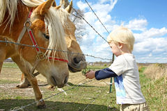 Young Child Feeding Grass to Horses on Farm. A very young child is standing by a farm fence in the country, feeding grass to two horses stock photos