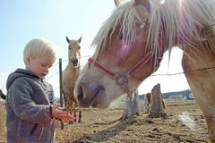 Young Child Feeding Horse on Farm Royalty Free Stock Image
